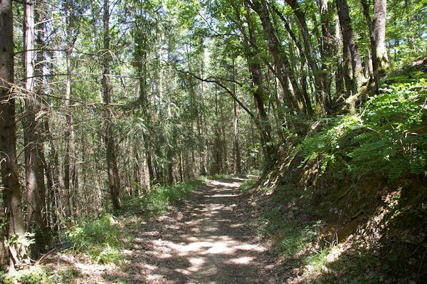 Le chemin arboré dans le vallon du ruisseau de Vermas