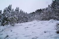 Le Bois de Sajust