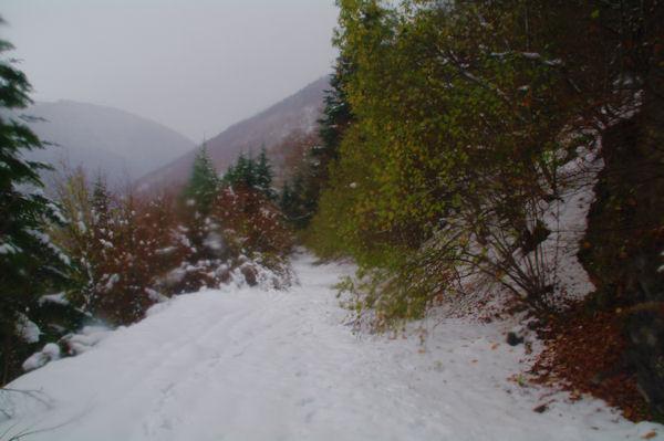 Dans le bois de Charruga