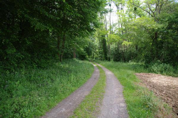 Le chemin vers le Moulin de Gouerris