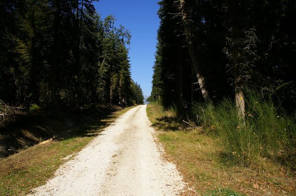La Forêt de Lahage vers La Rédaou