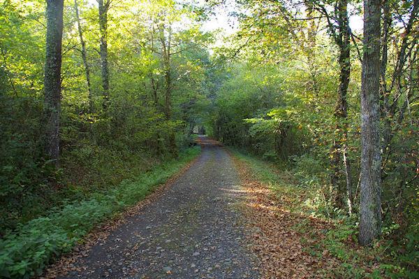 Le GR86 dans la forêt de Rieumes