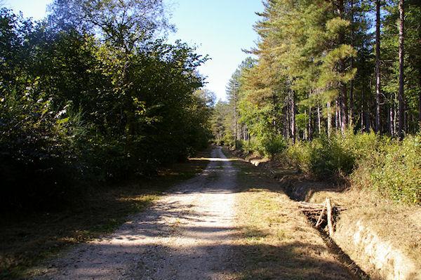 Le GR86 dans la Forêt de Lahage