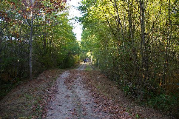 Le GR86 vers le ruisseau de La Rédaou