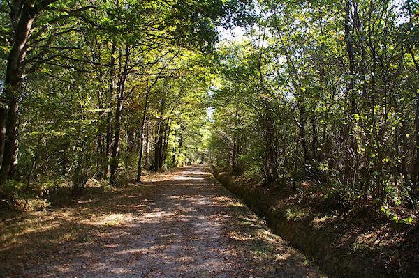 Le GR86 dans le Bois de La Rédaou