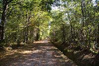 Le GR86 dans le Bois de La Redaou
