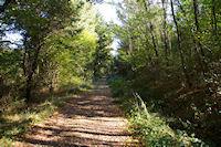 Le GR86 dans le Bois de Beaupuy