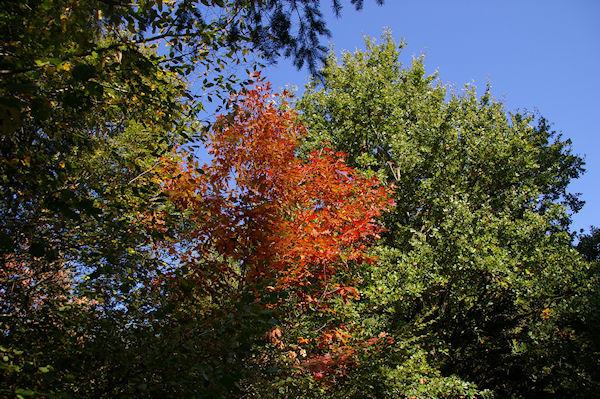 Couleurs d&#39automne dans le Bois de Beaupuy