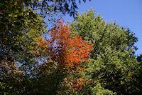 Couleurs d'automne dans le Bois de Beaupuy