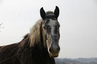 Un beau cheval a Bernes