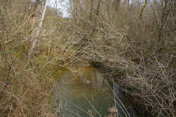 Le ruisseau de Monsenac ou de Sajas