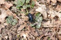 C'est le printemps pour le coleoptere aussi!
