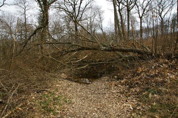 Dans le bois du Bédiau après le passage de la tempête Klaus