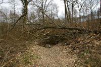 Dans le bois du Bediau apres le passage de la tempete Klaus