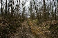 Dans le bois du Bediau