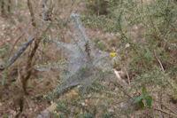 Une araignee a l'ouvrage dans le bois du Bediau
