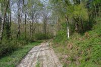 Dans le Bois du Sarrot