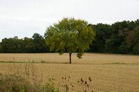 Paysage au Dreuil sur le GR86