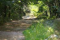 Un magnifique faisan dans le Bois de Fages