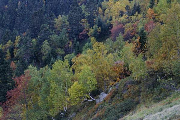 Le bois d&#39Echère