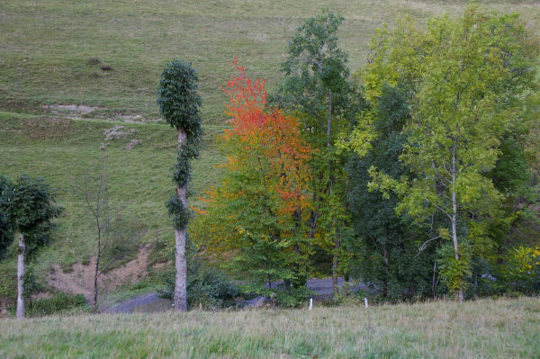 Arbres couleur d'automne avant le petit pont du Hité