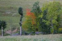 Arbres couleur d'automne avant le petit pont du Hite