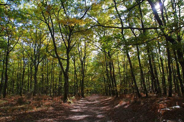 En forêt de Buzet vers Gourgue de Milou