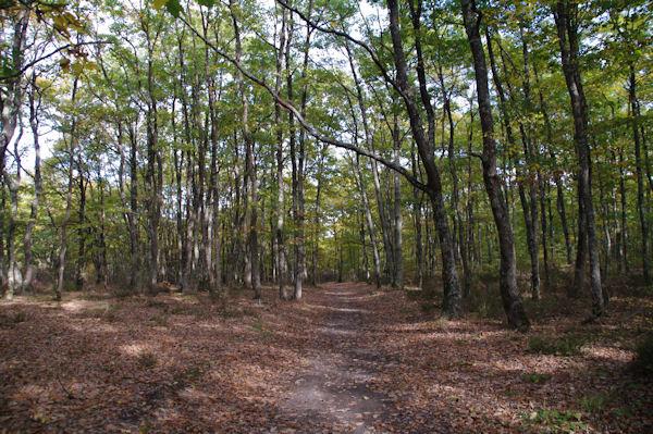 En forêt de Buzet vers Laque du Gorp