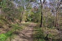 Le sentier remontant vers l_oppidum gaulois de Cluzel