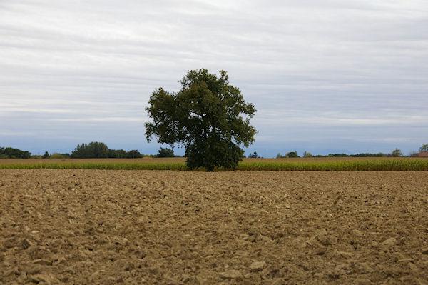 Paysage vers Lestéoué