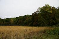 Paysage d'automne pres du ruisseau de Ninet