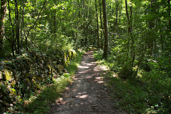 Dans les bois vers le Bergan
