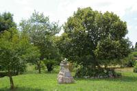 L'arbre de la Liberte a Boussan