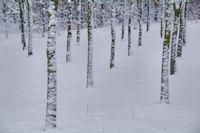 Alignement hivernal