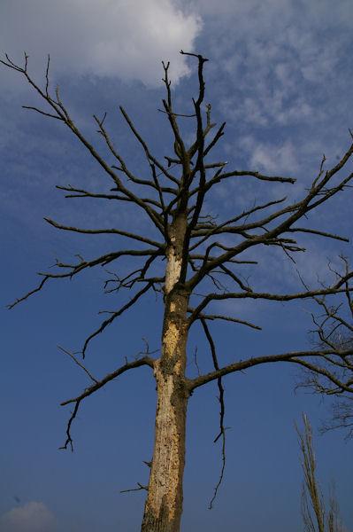 Nature morte à Matelasse