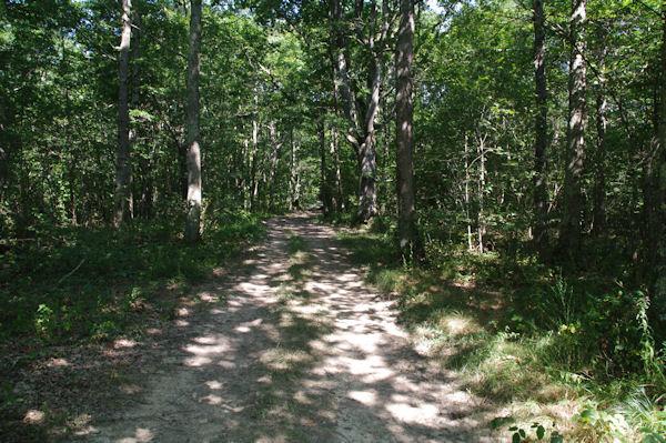 Le GR86 dans la Forêt de Mauboussin