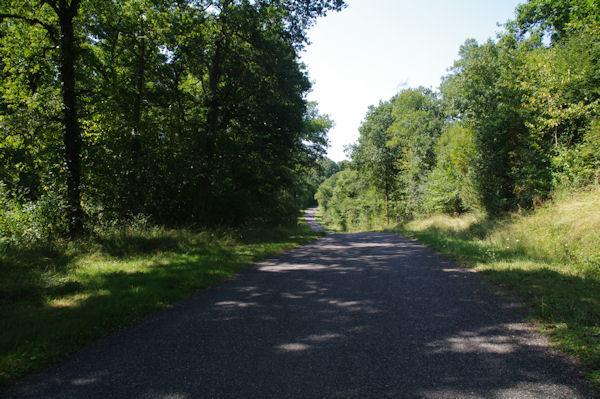 Sur la D98f dans la Forêt de Mauboussin