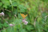 Un papillon en Foret de Mauboussin
