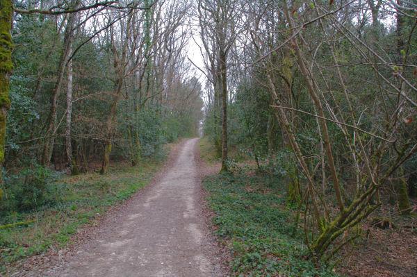 Dans la Forêt Domaniale de Gardeilhac