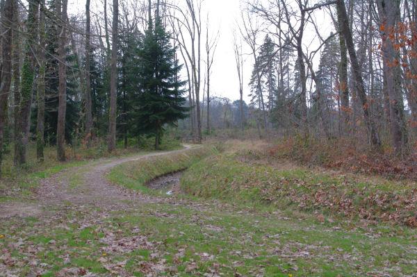 Dans la Forêt Domaniale de Gardeilhac près de la maison forestière