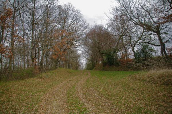 Le chemin au dessus du vallon du ruisseau de Coumemaron