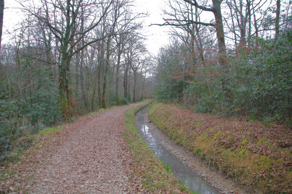 Dans la Forêt Domaniale de Gardeilhac au bord du canal de Franquevielle à Gardeilhac
