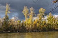 La Garonne depuis l'Ile de Martignac