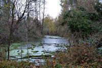 Bras mort de la Garonne