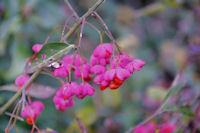 Fleurs d_hivers