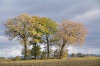 Tetralogie en automne