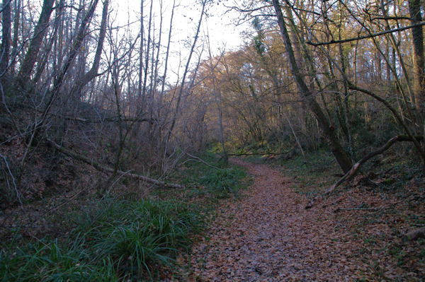 Le Bois de la Linasse