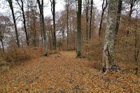 Un chemin forestier dans le bois de la Preze