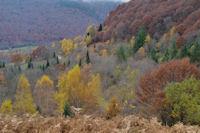 Paysage automnier dans le haut de la vallee du Bergons