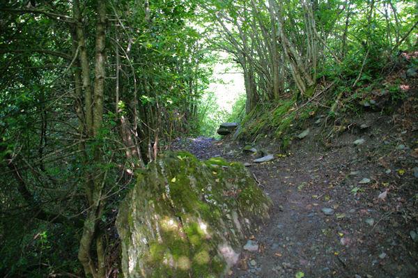 Le sentier dans le Bois du Sequet
